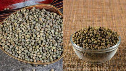 Bamyanın faydaları nelerdir? Hangi hastalıklara iyi gelir? Bamya tohumu ne işe yarar?