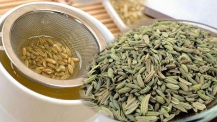 Rezene çayının faydaları ve nasıl demlenir? Rezene çayı neye iyi gelir...