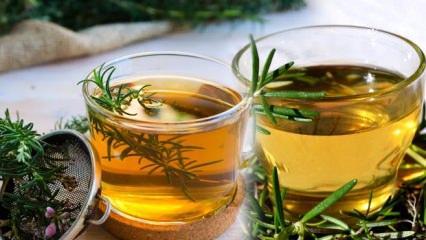 Biberiye çayının faydaları: Kimler kullanamaz? Nefis Biberiye çayı nasıl yapılır