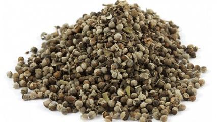 Hayıt tohumunun faydaları: Şifa deposu hayıt tohumu çayı neye iyi gelir?