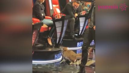Stüdyoya giren kedi Hadise'yi seçti!