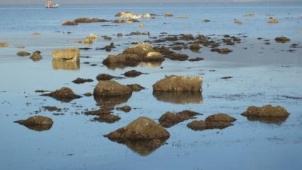 Deprem belirtisi mi? Burhaniye'de deniz çekildi