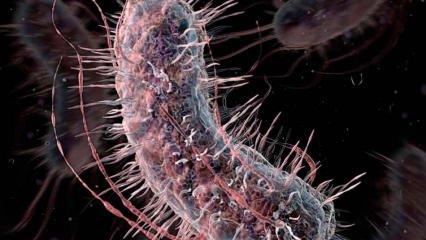 Et yiyen bakteri nasıl bulaşır? Et yiyen bakterinin belirtileri nedir ve tedavisi var mıdır?