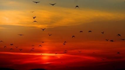 Kuşluk namazı nedir, fazileti nelerdir? Kuşluk namazı nasıl kılınır?