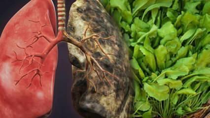 Terenin faydaları nelerdir? Tere hangi hastalıklara iyi gelir?