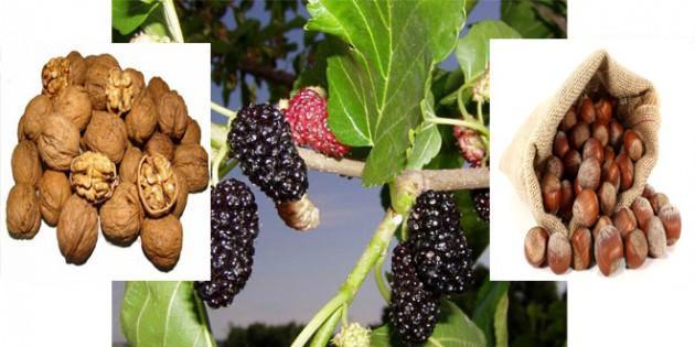 Ömre ömür katan besinler ve faydaları en faydalı besinler 97