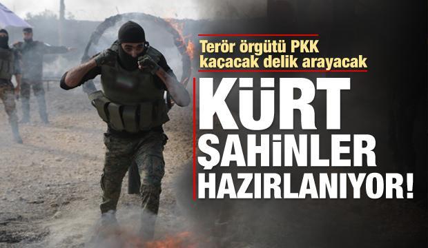 PKK/YPG'yi titretecek haber! Kürt Şahinleri...