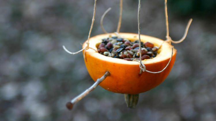 Portakaldan kuş yemliği nasıl yapılır